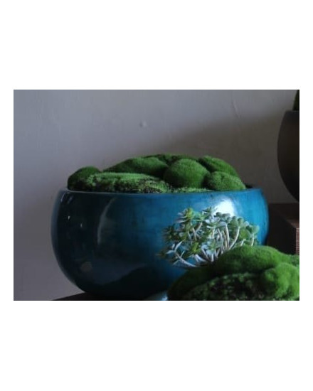 Natural Moss Giok