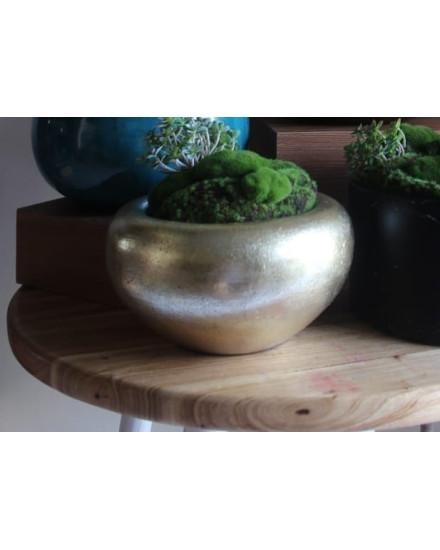 Natural Moss Gold